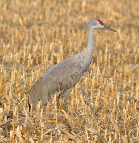 lone crane