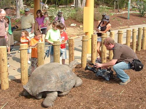 Tortoise Wars