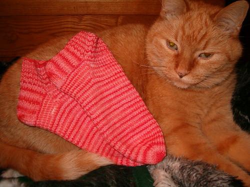Abba Modeling the Socks