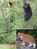 killer-cat (DiscoWeasel) Tags: bear pet tree animal cat feline funny lol misc internet humor meme n00b wastesometime