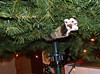 Don't mess with the tree (Kerrie Lynn Photography (Sugaree_GD)) Tags: christmas tree cat paw christmastree inside cc100