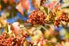 Fall - Southwest Washington (pomegranatecreations) Tags: bestnaturetnc06