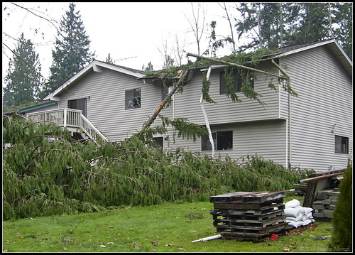 Hanukkah Eve Wind Storm Of 2006