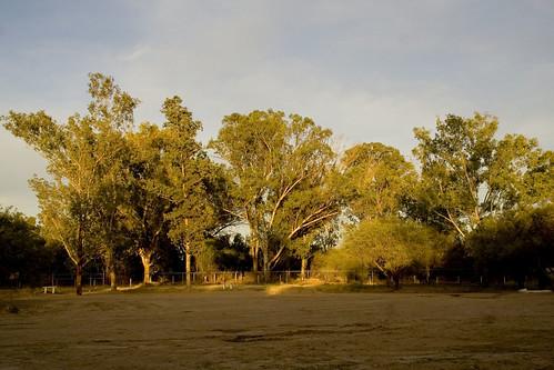 Los árboles I