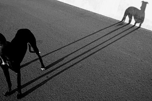 Connexió Gos by Sergi Bernal