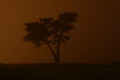 Standing Alone (Early Skies) Tags: sanfrancisco california tree misty fog night dark sanfranciscobayarea bayarea lone nocturne nite