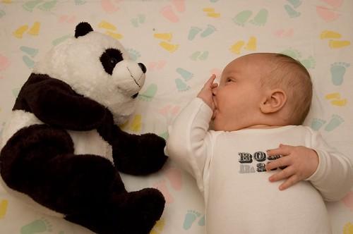 dylan and his panda