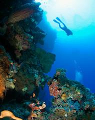 reefdvr7127pwc (gerb) Tags: blue topf25 beautiful silhouette topv111 coral 1025fav 510fav wow indonesia topv555 topv333 bravo underwater topv1111 topv999 scuba loveit pi topv777 diver d100 reef sponge topv3333 manado gorgonian softcoral bunaken 105mmf28gfisheye barrelsponge pfo 3waychallenge 3wc tvx abigfave 3w5 impressedbeauty photofaceoffwinner pfogold
