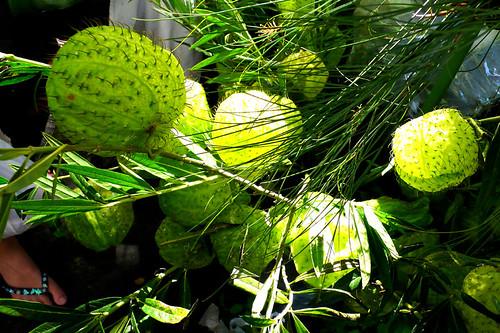 salcedo green orbs
