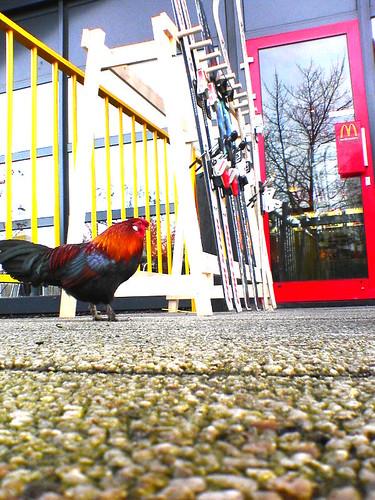 Bizarr...only in Amsterdam!