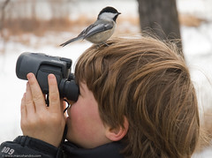 Where did that chickadee go? (Marc Shandro) Tags: boy bird nature look kids see search funny head watch watching binoculars chickadee perch land find bold gettyimages blueribbonwinner cotcmostfavorited boldness instantfave outstandingshots abigfave anawesomeshot