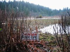 Beaver Lake - Stanley Park