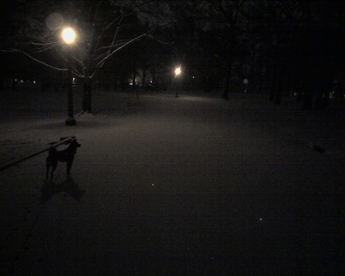 Walk with Kuma at night in the snow in the park