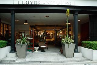 Lloyd's Antiques Aoyama/�?��������ƥ��������Ļ�