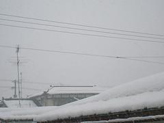 風とともに吹雪く