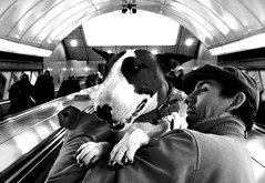Dogs and Angels (lrmeulman) Tags: dog london tube pitbull englishbullterrier angeltubestation commentsbest