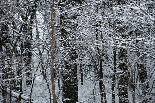 snowinfeb