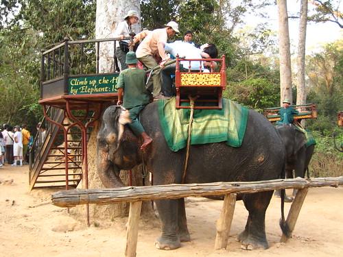 走的頗快的大象