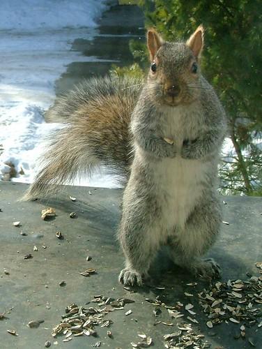 Menacing squirrel
