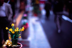 on the street (moaan) Tags: flower 50mm chinatown dof bokeh kobe flowerpot 2007 jonquil f095 fujiprovia100f chinesefestival canon7 rdpiii explored canonf095 canon50mmf095 bytheroadside 30faves30comments300views expd  gettyimagesjapanq1 gettyimagesjapanq2