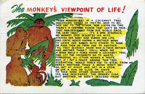 Postcard:  The Monkey's Viewpoint of Life!