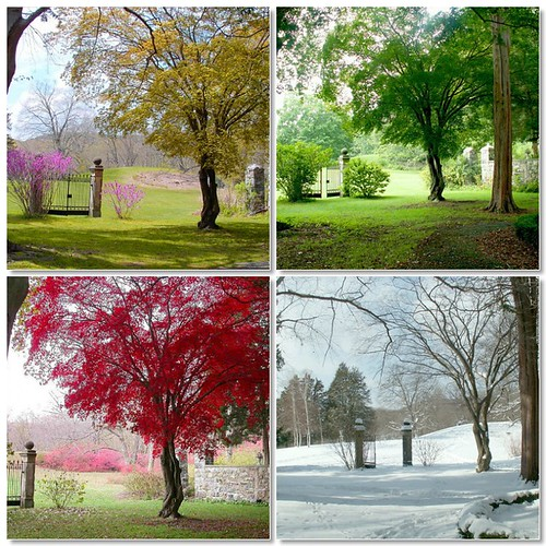 Four Seasons by natureluv.
