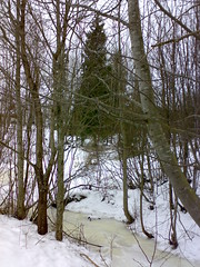 040320072079 (Nystin) Tags: snow tree suomi finland lumi puu spruce jrvenp oja kuusi n73 abigfave rampakka