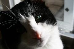 IMG_4585 (rwike77) Tags: cats schrodinger digitalrebelxti