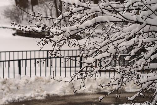 Calhoun Snow 0607