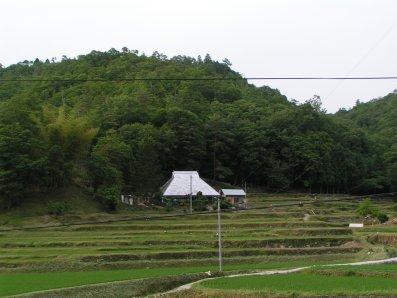 paysage japonais campagne (4)
