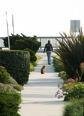 20070312-026 (I, Puzzled) Tags: california dog santacruz ipuzzled westside 2007 dogdayafternoon 200703 200070312