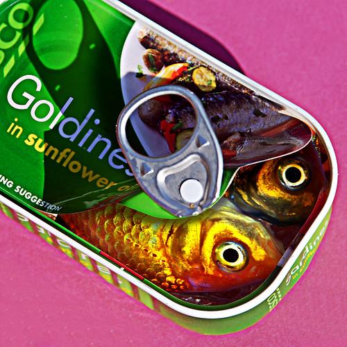 031607 'Gold'ines in Sunflower Oil