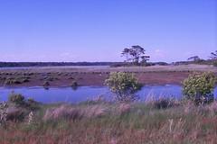 Assateague Island (alteredboi) Tags: 2006 assateagueisland