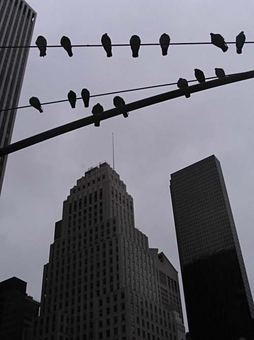 bird silhouettes of 59th Street