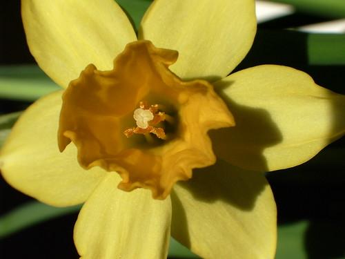 Stamens, pollen, etc.