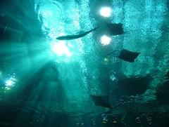 Undersea Sun - by Passive Man