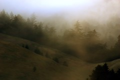 the thick of it (m krause) Tags: california beach weather fog coast marin m goldengate mttam megankrause mkrause mkrausephotography megankrausephotography wwwmegankrausecom