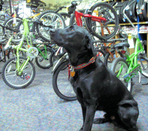 Longmont shop dog