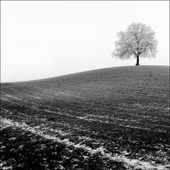 lone tree - by maz hewitt