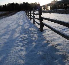Daphene's Hobby Farm - Fence