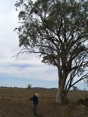 Meta looking at Koala