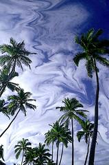 Palms - by Hanadi Traifeh