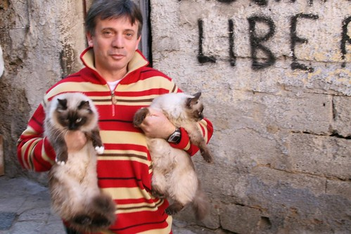 Man with kitties