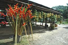 tarantin-de-flores