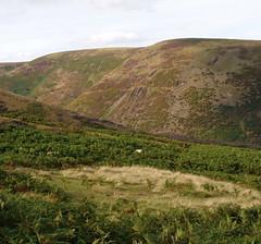 The Long Mynd (ExeDave) Tags: uk autumn england landscape shropshire heather september heath gb bracken nationaltrust esa moorland heathland gorse longmynd upland thelongmynd ulexgallii sssi shropshirehills westerngorse