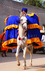 Nagarchi (Chitrakari) Tags: horse india drums interestingness cool explore canon350d procession sikh punjab hindu singh akali nihang colorphotoaward impressedbeauty decoratedanimal