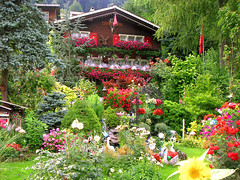 Swiss Garden (seven years) Tags: flowers garden switzerland swiss appenzell