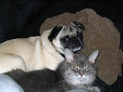 Tyrone and Percy (tianadargent) Tags: dog cat percy tyrone