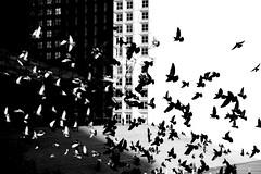 Tessellaction (Hughes Léglise-Bataille) Tags: blackandwhite bw paris france topf25 birds contrast topf50 noiretblanc pigeons silhouettes olympus 2006 ladefense topf300 fv10 streetphoto escher topf100 tessellation topf200 grandearche topf400 e500 ixtlan topv1000 topv3000 topv4000 winnerflickrsweekly50contest abigfave wnwthebirds