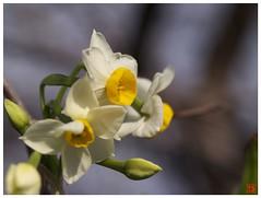 Flower 070111 #01